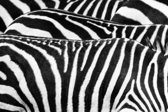 dierentuin LR-0059
