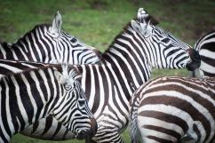dierentuin LR-0081