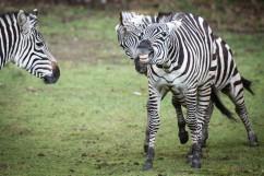 dierentuin LR-0093