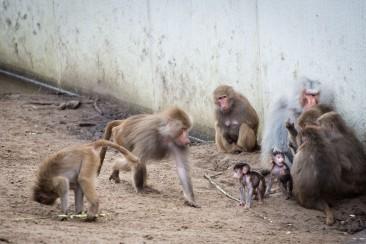 dierentuin LR-0233