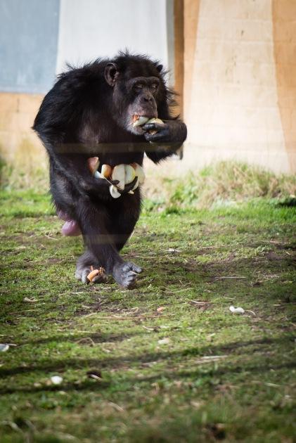 dierentuin LR-0323