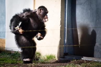 dierentuin LR-0329