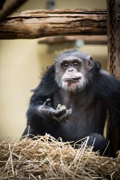 dierentuin LR-0335