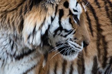 dierentuin LR-0446