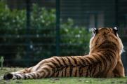 dierentuin LR-0450